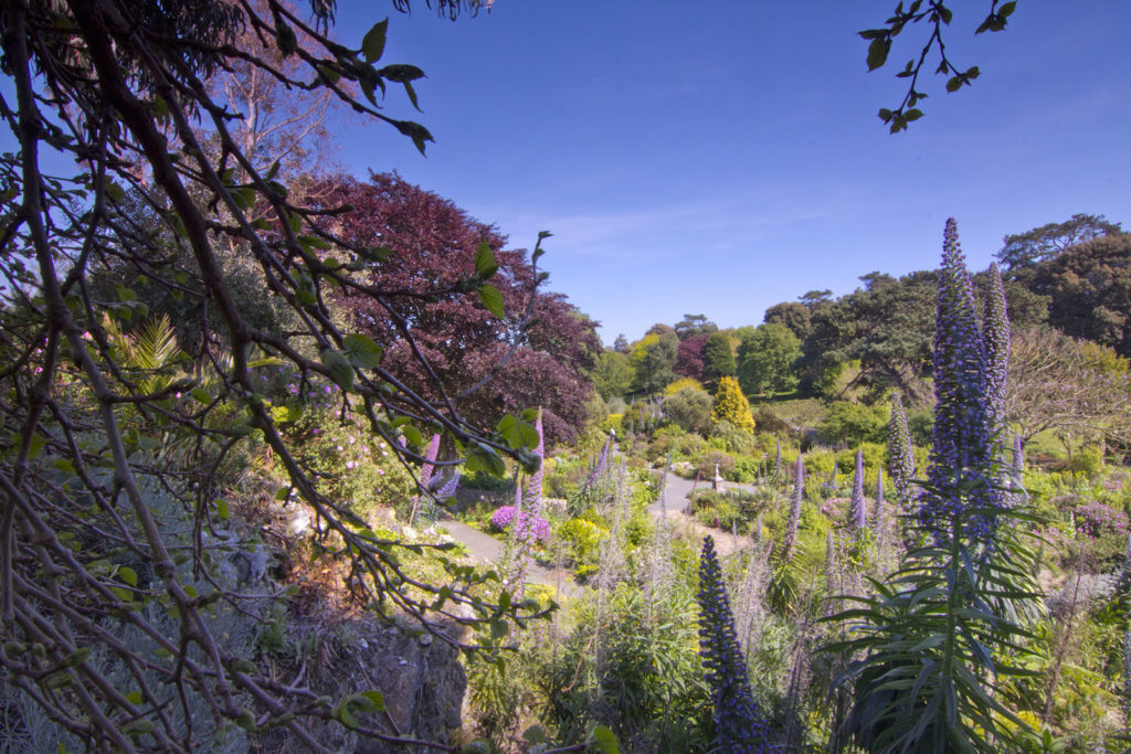 Ventnor Botanic Gardens 160514 01.jpg